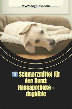Beobachtet ihr eines der folgenden Anzeichen, leidet euer Hund möglicherweise unter Schmerzen:Ungewöhnliche Geräusche wie Jaulen oder FiepenGeräusche aus dem Bauchraum wie Gurgeln oder BlubbernFlache Atmung und ein schneller PulsGekrümmte KörperhaltungVerstärktes Lecken einer Körperstelle Leiden, Tricks, 10000 Steps, Abdominal Pain, Vet Office