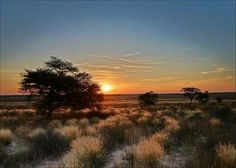 Places of interest to visit in South Africa and Botswana. Kgalagadi Transfrontier Park... Wildlife includes migrating herds of wildebeest and springbok, plus predators like raptors and black-maned Kalahari lions. Various lodges and wildnerness camps offer game-viewing drives and guided walks with park rangers. #wildlife #southafrica #photosafari #tourism #extremefrontiers #bush #adventure #holiday #vacation #safari #tourist #travel