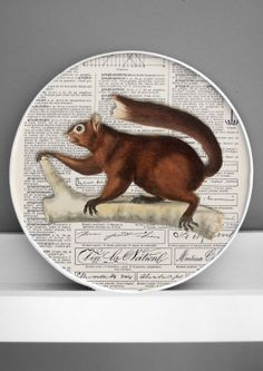 brown squirrel 3D natural history print framed by DigitalArtParis, $24.00