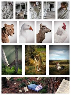 Dominic Cotter Dephoff Tararua College Level 3 Photography Folio Board 1 Farm Photography, Photography Portfolio, Photography Photos, Level 3, Art Boards, Documentaries, Graffiti, Lion Sculpture, Statue