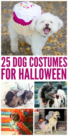 25 Dog Costumes for Halloween!