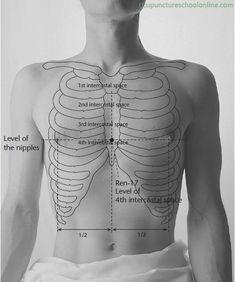 Ren-17-Chest-Centre-DANZHONG-Acupuncture-Points-1.jpg (491×588)