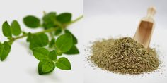 maghiran5 Parsley, How To Dry Basil, Projects To Try, Herbs, Health, Food, Home, Health Care, Essen