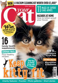 Your Cat August 2015
