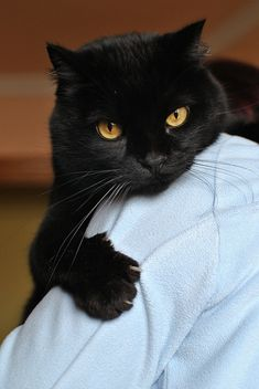 Because I have a black cat too and his name is Pau. by Out in the street., via Flickr