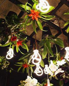 #interior #decor #plant #herb #greenhouse #sky #planter #растения #интерьер