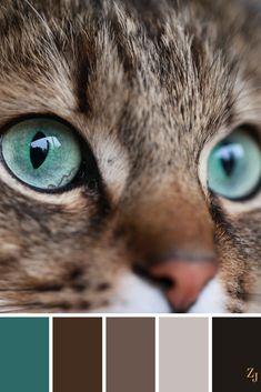 ZJ Color Palette 587 - No paint, no gain :) Colour Pallette, Colour Schemes, Color Combos, Brown Colour Palette, Cat Colors, Colours, Color Balance, Design Seeds, Colour Board