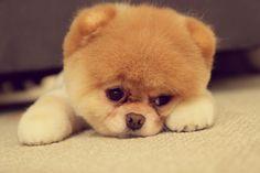 Oh my gosh! Such a little teddy bear!!!