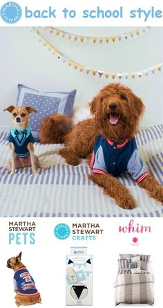 Your dog is sure to be the teacher's pet with the new apparel from Martha Stewart Pets @PetSmart
