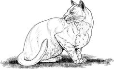 Cat 18 Coloring page