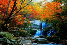 bangtaesan,korea Beautiful Nature Pictures, Beautiful Places, Haunted Woods, Places To Travel, Places To Go, Waterfall Photo, Nature Paintings, Nature Scenes, Beautiful Gardens