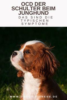 Wenn man einen Welpen oder Junghund hat, denkt man eigentlich, dass man auf jeden Fall ein paar Jahre von Gelenkproblemen verschont bleibt. Doch die OCD der Schulter ist eine typische Erkrankung beim Junghund, die zwischen dem 4. Und 9. Lebensmonat auftritt. Was die Erkankung bedeutet, ob man sie vermeiden kann, wie man sie erkennt und behandelt, liest du in meinem Artikel. OCD | Junghund | Welpen | Gelenkprobleme | Gelenkerkrankungen | Arthrose Hund | Hundegesundheit | Hundephysio