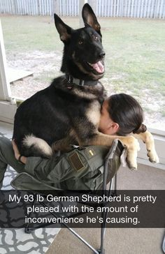My 93 lb German Shepherd is pretty pleased with the amount of inconvenience he's causing. via