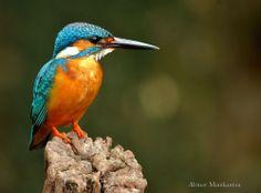King of fishing Photo by Abinav Manikantan