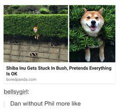 Dan is actually a shibe.COMFIRMED