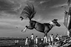 These Captivating Black & White Photos Will Make You See India Like You've Never Seen Before Black White Photos, Black And White, Street Photography, Art Photography, Indian Horses, Cute Comics, Sea Birds, Photojournalism, Photo Art