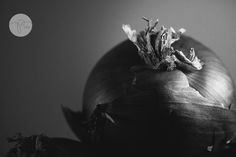 onion {everyday in b&w} photo | Photography 2204 | CM Pro Daily Project
