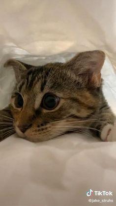 Cute Little Kittens, Cute Baby Cats, Cute Little Animals, Kittens Cutest, Cats And Kittens, Cute Dogs, Funny Cute Cats, Funny Cats And Dogs, Cute Funny Animals