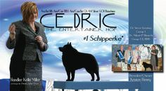 http://www.bestinshowdaily.com/bis-amcan-biss-amcanint-am-silver-silvergch-bonchien-cedric-the-entertainer-hof/