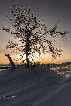 Frozen tree by Gunar Streu . Costa, Creative Food Art, Dusk Till Dawn, Sky Landscape, Winter's Tale, Landscape Wallpaper, Tree Lighting, Trees To Plant, Beautiful Landscapes