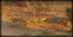 Queen Karula on #SafariLive with @JamesRAHendry 8-19-16