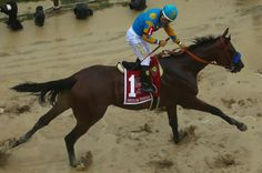 Description of . American Pharoah ridden by Victor Espinoza crosses the finish line to win the running of the Preakness Stakes at Pimlico Race Course on May 2015 in Baltimore, Maryland. (Photo by Maddie Meyer/Getty Images) Preakness Stakes, Triple Crown Winners, American Pharoah, All About Horses, Racehorse, New York Post, Thoroughbred, Horse Racing, Derby