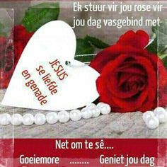 Lekker Dag, Goeie More, Good Morning Wishes, Afrikaans, Rose, Quotes, Quotations, Pink, Roses