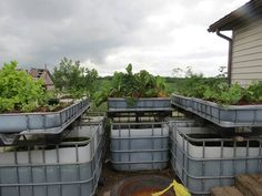 planted aquaponics tanks #hydroponicgardening
