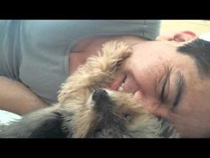 Little Yorkie Petting His Human #funny #cute #aww #lol