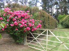 Elgin Open Gardens