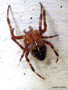 Spider / Spin