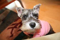 Lionel's dog, Sadie (before)