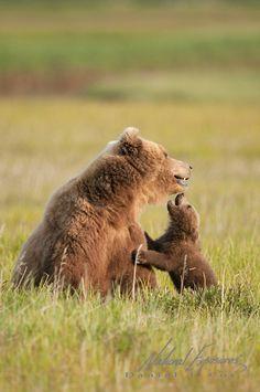Brown bear mother and cub in Katmai National Park, Alaska.