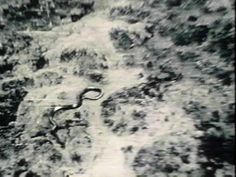The picture above was taken in 1959 by a Belgium helicopter pilot, Col. Remy Van Lierde, while on patrol over the congo.  The snake he saw measured approximately 40 to 50 feet in length, dark brown/green with a white belly.  It had triangle shaped jaws and a head about 3 ft x 2 ft.  Experts have analyzed the pictures and have verified them as authentic.  They also have verified the size of the creature by matching ground features to the snake.  As the helicopter flew in lower the snake