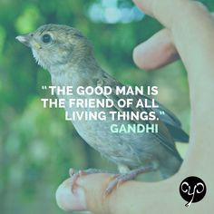 Show some love to our animal friends! All Cause You Care products donate 25% to IFAW to help save animals! Check us out: www.causeyoucareco.com #gandhi #animals #quote