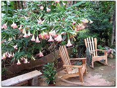 Casa Yolanda y Tomás, jardín. Vinales, Outdoor Chairs, Outdoor Furniture, Outdoor Decor, Plants, Home Decor, Home, Entryway, Gardens