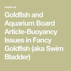Goldfish and Aquarium Board Article-Buoyancy Issues in Fancy Goldfish (aka Swim Bladder) Aquarium Maintenance, Goldfish, Boards, Swimming, Fancy, Math, Planks, Swim, Math Resources