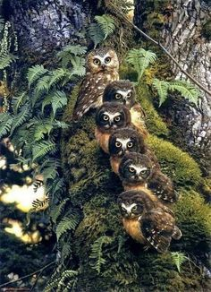 A beautiful Owl Family Beautiful Owl, Animals Beautiful, Beautiful Family, Majestic Animals, Animals And Pets, Cute Animals, Funny Owls, Owl Family, Happy Family