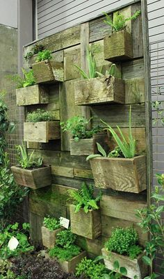 Vertical gardening - I could easily make this with all our scrap bits of wood -- just need to salvage something for the backboard...