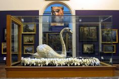 The Silver Swan, Bowes Museum, Barnard Castle. A musical automaton and icon of the museum, the Silver Swan dates from 1774 and was purchased for the museum by John Bowes from a Parisian jeweller in 1872 for Jean Honore Fragonard, Barnard Castle, Animal Action, Silver Swan, Science Museum, 18th Century, London, History, Places