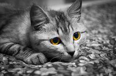 ☼ Уellow-eyed predatoress ☼ - My favorite pet cat named Muska.  ☼ Желтоглазая хищница ☼ Моя кошка - Муська.