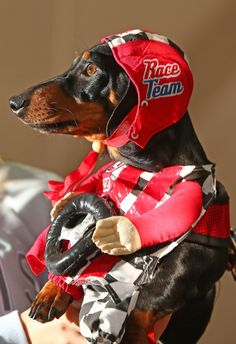 And this is Cooper, who came as a racing car driver. | 17 Pictures Of Sausage Dogs In Costumes That Will Make You Smile