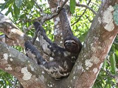This sloth really knows how to relax!