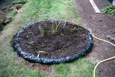 Picture of Build a bog for carnivorous plants in your backyard!
