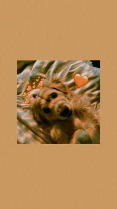 dog wallpaper iphone Wallpaper bonito, wallpaper T - dog Puppy Wallpaper Iphone, Tier Wallpaper, Cute Puppy Wallpaper, Emoji Wallpaper, Iphone Background Wallpaper, Cute Disney Wallpaper, Retro Wallpaper, Cute Cartoon Wallpapers, Locked Wallpaper