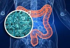 Onze darmen spelen een ongelooflijk belangrijke rol voor onze gezondheid. Met dit artikel willen we je daarom helpen je darmen in topconditie te houden.