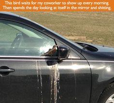 mad-munch: if i were a bird