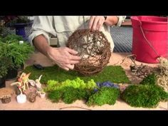 Take miniature gardening to new heights. Learn how to create a secret fairy garden in a willow sphere. Just add moss in the bottom, some plants and accessories and fairies will be anxious to move in. Plants, fairies and accessories can be purchased from our online shop http://miniature-gardening.com.