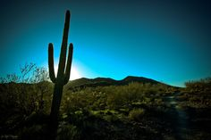 Arizona desert - http://desert-rose-dreams.tumblr.com/