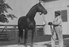 """""""There will never be another horse like Man O'War. He gave new meaning to the world of horseracing because he had the nerves of steel and the drive to win. He was graceful, but powerful and a true racehorse that loved to work."""" - Unknown"""